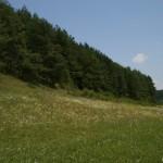linum_hirsutum_biotop